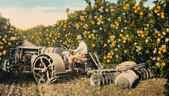 Orange grove postcard 19_0503b