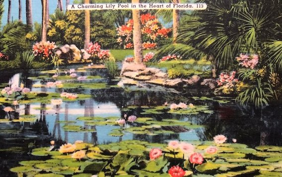 Postcard Florida lily pond 19_0924b - Copy